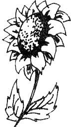 bunga majemuk bunga jantan bunga betina bunga sempurna